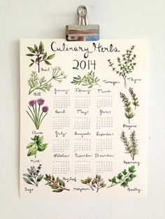 Culinary Herbs Calendar 2014 by thelittlecanoe on Etsy