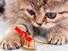 Christmas Kitty, Magical Christmas, Christmas Animals, Cute Puppies And Kittens, Cats And Kittens, Santa's Little Helper, Funny Animal Pictures, Cat Love, Fur Babies