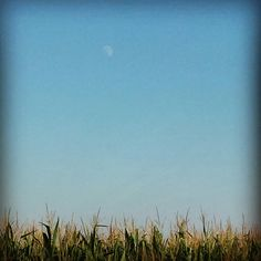 Moon on corn field - Italy august