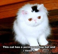 Kitty with a top hat