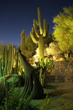 Cactus garden at the Phoenician Resort at the base of Camelback Mountain.