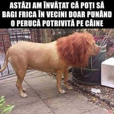 Daily Funny Pictures and videos. Viral memes and quotes. Funny WhatsApp Statuses and messages. Animal Memes, Funny Animals, Cute Animals, Stupid Funny, Funny Cute, Funny Laugh, Funny Stuff, Tierischer Humor, Funny Dogs