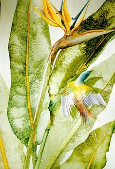 Bird of Paradise by Meganne Forbes