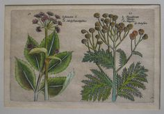 Buch: Botanik