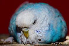 Фото животных » Чех ленивый.