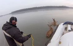 """""""James saw a Facebook post about some deer stuck out on the ice in the middle of Albert Lea Lake, so he called up his dad and they broke out the hovercraft. It's a father son rescue mission unlike anything you've ever seen."""" -- http://www.ecorazzi.com/2014/02/13/two-guys-with-hovercrafts-save-deer-stuck-on-frozen-lake/"""
