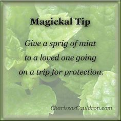 :: ° P a g a n Magick ° :: Give a sprig of mint to a loved one going on a trip for protection. Wiccan Witch, Wicca Witchcraft, Magick, Magic Herbs, Herbal Magic, Plant Magic, Eclectic Witch, Witch Spell, Fete Halloween
