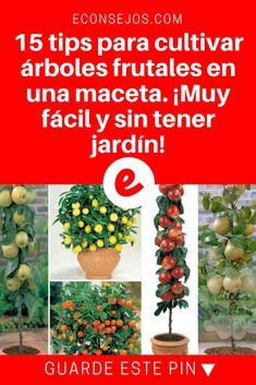 Arboles en maceta | 15 tips para cultivar árboles frutales en una maceta. ¡Muy fácil y sin tener jardín! | 15 tips para cultivar árboles frutales en una maceta. ¡Muy fácil y sin tener jardín!