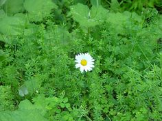 The Small Gems: When a Little Lone Daisy Turns a Frown into a Smil...