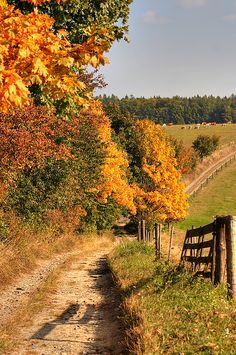 Country Road And Autumn Landscape. Looks like my country road. Country Life, Country Roads, Country Fall, Usa Country, Country Living, Vie Simple, Autumn Scenes, Country Scenes, Landscape Prints