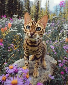 cats pets cute - Bengal Cat - Ideas of Bengal Cat - cats pets cute The post cats pets cute appeared first on Cat Gig. Pretty Cats, Beautiful Cats, Animals Beautiful, Pretty Kitty, I Love Cats, Crazy Cats, Cool Cats, Animals And Pets, Cute Animals