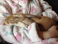 /r/rabbits is an open community where users can learn, share cute pictures, or ask questions about rabbits. Please note we are a *pet rabbit*. Big Bunny, Bunny Art, Cute Bunny, Cutest Bunnies, Cutest Bunny Ever, Jack Rabbit, Pet Rabbit, Animal Pictures, Cute Pictures