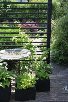 Afbeeldingsresultaat voor garden privacy horizontal