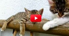 LOL! Someone Sure Does Want His Brother To Wake Up And Play! | The Animal Rescue Site Blog