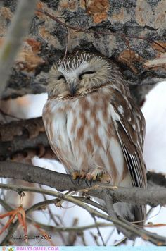 owl...catching some Zzzzzz's