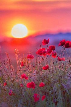 Most beautiful of sunrises