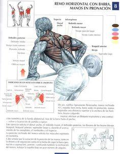 Musculos que se trabajan segun ejercicio
