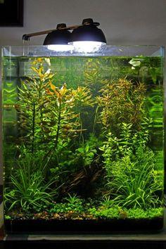 tiny aquarium Aquarium Aquascape, Betta Aquarium, Betta Fish Tank, Nature Aquarium, Aquarium Ideas, Aquarium Design, Aquascaping, Planted Aquarium, Tropical Freshwater Fish