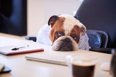 Feeling sleepy or drowsy? How about logy? Is that book you're reading soporific? Read this list for more obscure sleep words before bedtime tonight! British Bulldog, French Bulldog, Dombey And Son, Sleep Talking, Feeling Sleepy, Middle English, Beautiful Library, Old Norse, Dog Travel