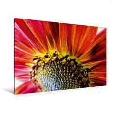 Ein Motiv aus dem Kalender Strahlende Sonnenblumen - CALVENDO