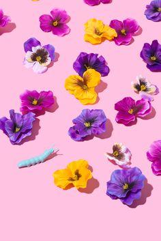 Spring Garden / Violet Tinder Studios