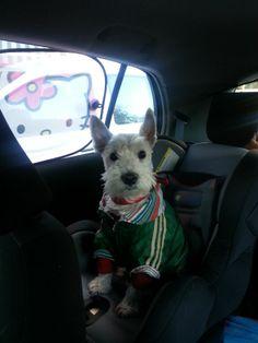 Toby en su sillita homologada listo para viajar en el coche