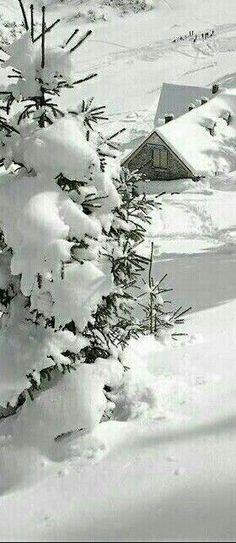 Winter Light, Winter Snow, Winter White, Winter Christmas, Snow Scenes, Winter Scenes, Winter Lodge, Winter Magic, Winter's Tale