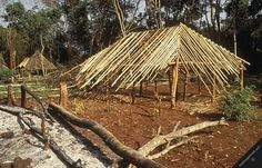 Photo #02926: central african republic rain forest trees house ...