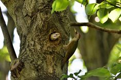 Incubation Change , Japanese green woodpecker Pair by Mubi.A