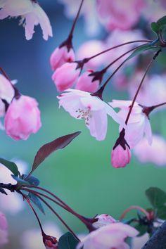 """""""Alguns olham para o jardim do vizinho… Outros preferem cultivar os próprios sonhos… Adivinhe quem é mais feliz?"""""""
