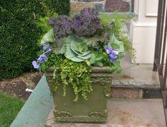 Autumn Winter Container Gardening Ideas