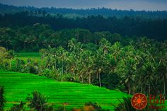 #Indonesia #Bali #Ricefields #Nature #Green #Trees #Travel