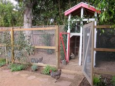 photos with chickens family - Google Search