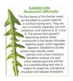 Dandelion leaf uses
