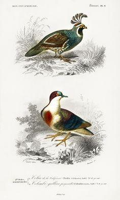 Vintage Birds, Vintage Images, Image King, Vintage Bird Illustration, Different Types, Antique Paint, Free Illustrations, Bird Prints, Art Sketches