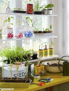 Taimikasvatuksen alkeet | Kotivinkki Garden Windows, Beautiful Gardens, Planting Flowers, Planter Pots, Plants, Diy, Furniture, Outdoor Ideas, Garden Ideas