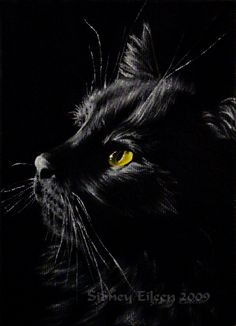 beautiful cat...looks like MaggieMae