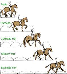 Aires del caballo