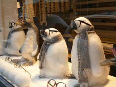 Cute winter optical display