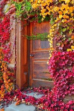 The colors of fall, my FAVORITE season, I can not wait!