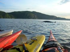 Kayaking in Tadoussac, Canada | Azimut Aventure inc. Reviews - Tadoussac, Quebec Attractions ...