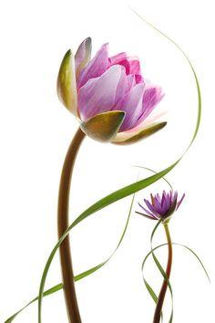 Фотографии цветов Мишеля Гартнера (Michel Gantner)