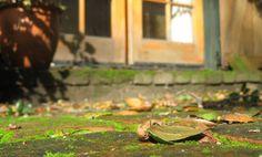 Het ecologische aanvalsplan voor groene aanslag op straat- of terrasstenen! Azijn is echt een wondermiddel..