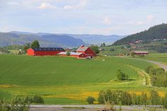 the whole farm is RED NORWAY