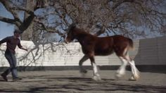 """Best Commercials of 2013: Budweiser, """"The Clydesdales Brotherhood"""" - my favourite of all the Budweiser commercials, also because it has a Stevie Nicks track."""