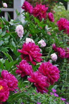 My Flower, Colorful Flowers, Beautiful Flowers, Cactus Flower, Exotic Flowers, Beautiful Gorgeous, Purple Flowers, Fall Plants, Garden Plants