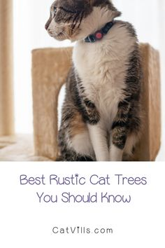 So, you want a few rustic cat trees that will perfectly fit in with your farmhouse decor, right? I've got you covered, my friend! Below, we'll take a look at my top 7 favorite options that you can buy right now.