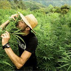 Franco Loja: Saying Goodbye To A True Cannabis Hero - http://houseofcobraa.com/2017/01/03/55572/