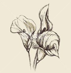 calla lily graphic - Google Search