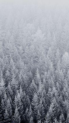 ノルウェーの森 iPhone5 壁紙